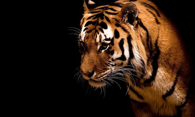 Благодарность тигрицы, Автор неизвестен, Бочонок Мёда для Сердца
