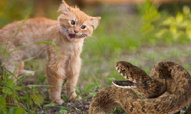 Безответная любовь кота, Татьяна П., Бочонок Мёда для Сердца