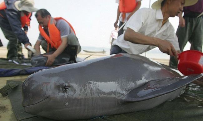 Слёзы дельфина, Автор неизвестен, Бочонок Мёда для Сердца