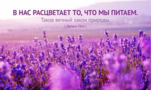 В нас расцветает то, что мы питаем. Таков вечный закон природы., Иоанн Гёте, Бочонок Мёда для Сердца