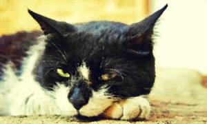 Вставная челюсть кота Маркиза, Бочонок Мёда для Сердца