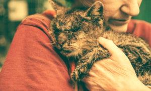 Уродливый кот, Игорь Мазунин, Бочонок Мёда для Сердца