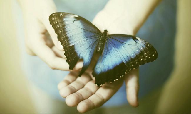 Творите люди чудеса, Юлианна Ко, Бочонок Мёда для Сердца